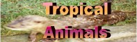 tropical animals icon.jpg (7799 bytes)