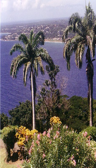royal palms.jpg (90085 bytes)